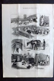 ILN 1880 Antique Print. The Royal Buckhounds: Sketches of the Kennels at Ascot